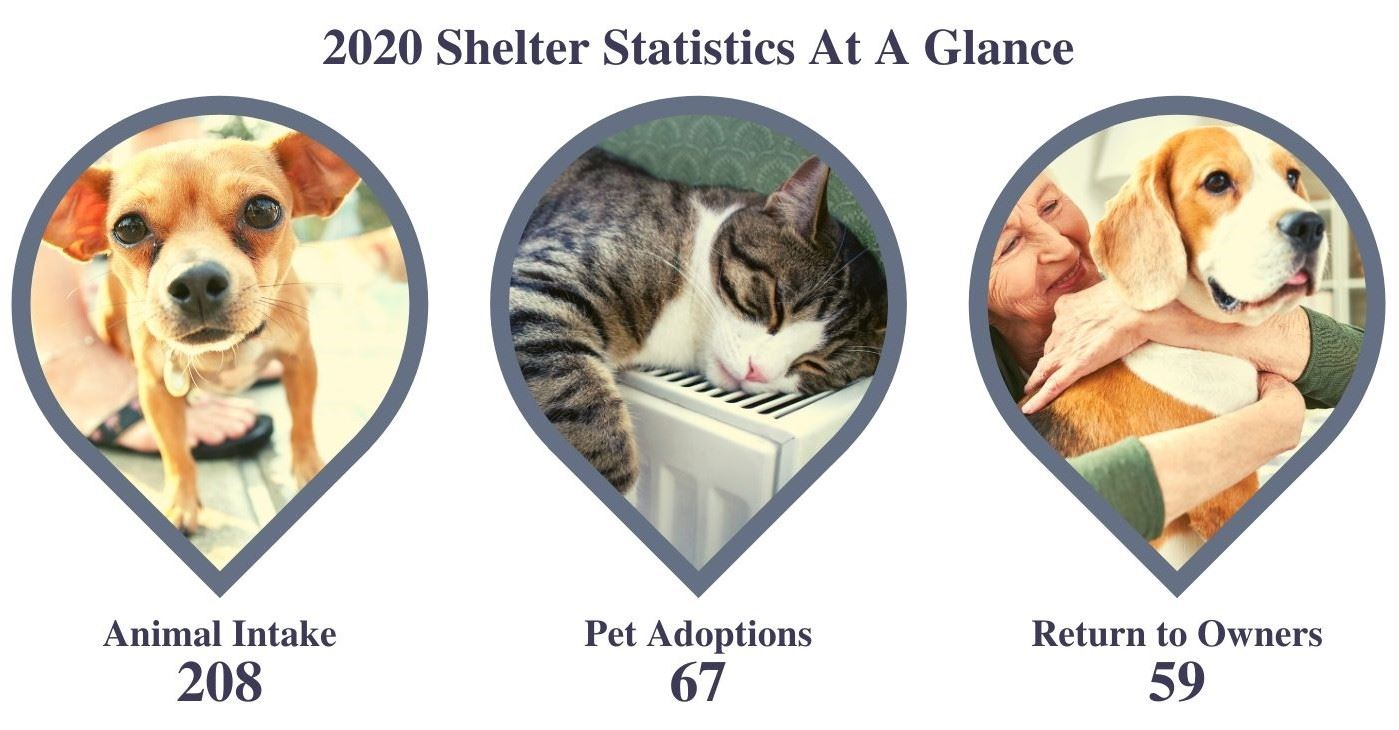2020 Shelter Statistics At A Glance