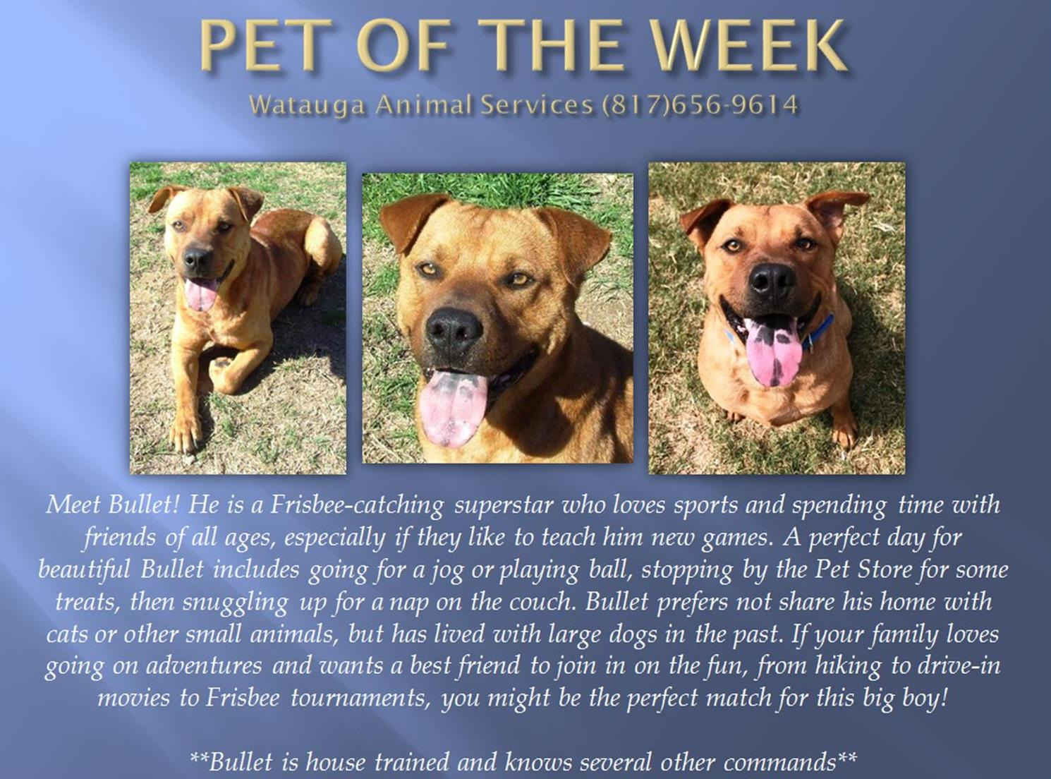 Pet of the Week 091517