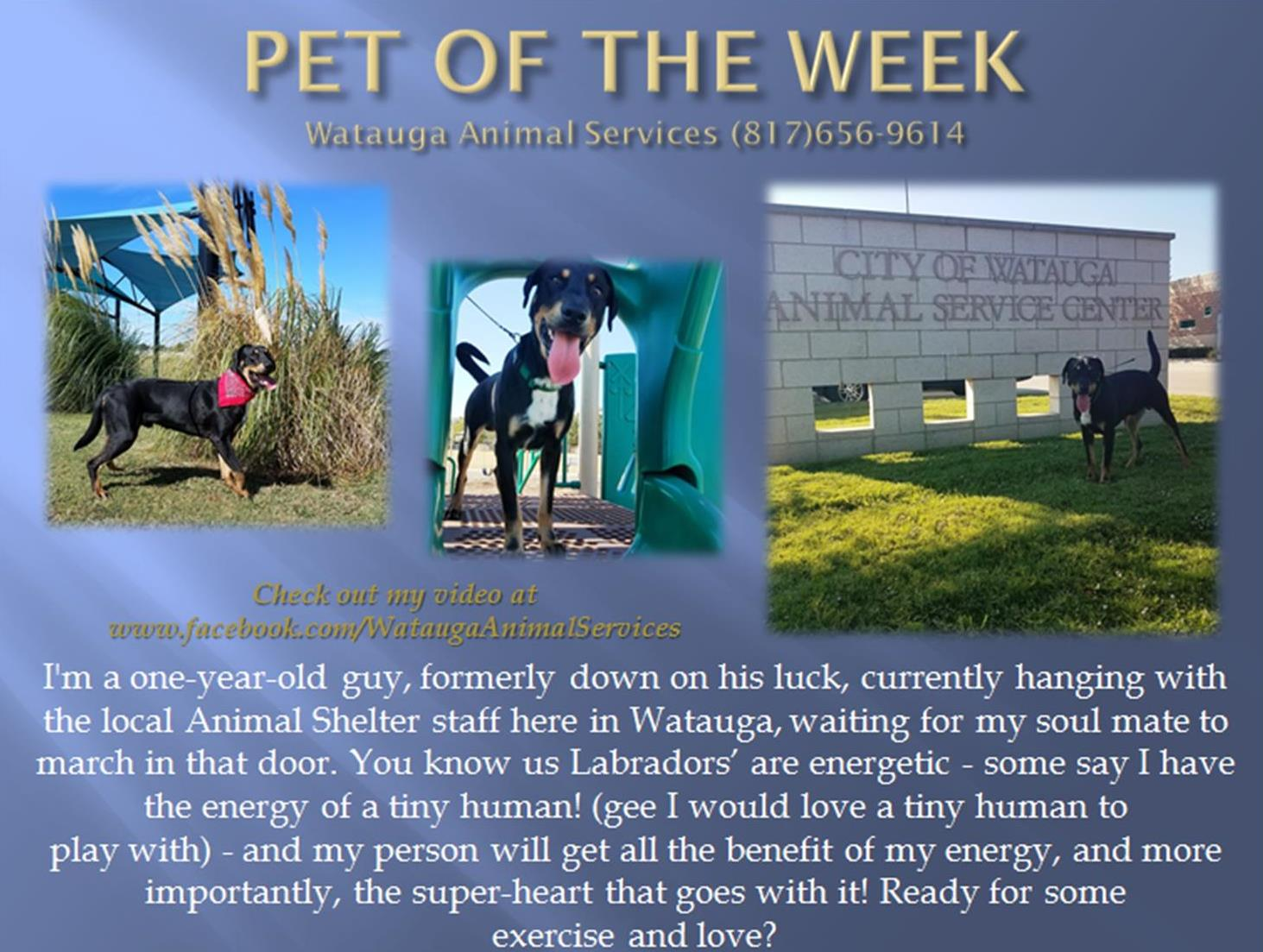 PET OF THE WEEK BEAR