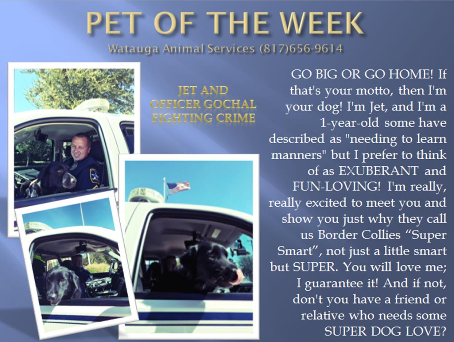 PET OF THE WEEK - GOCHAL