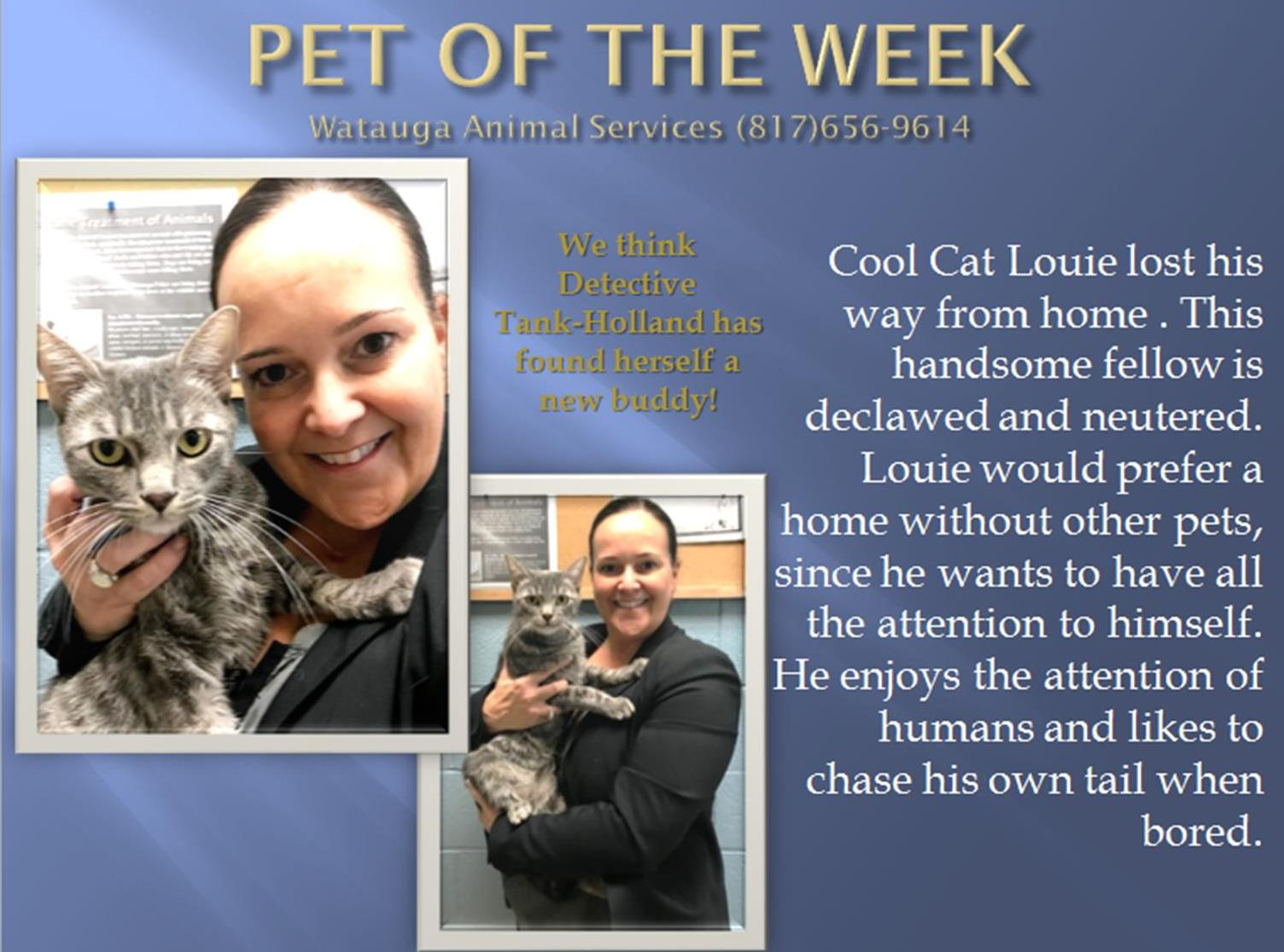 Pet of The Week Tank 111617