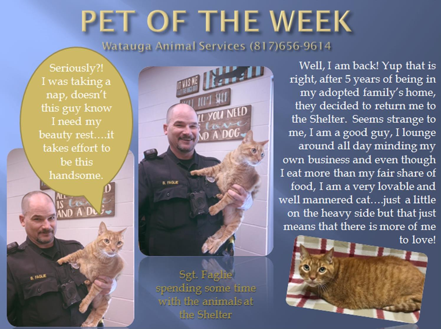 Pet of the Week 112217 Faglie