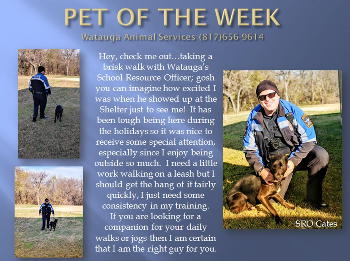 Pet of the Week - Cates