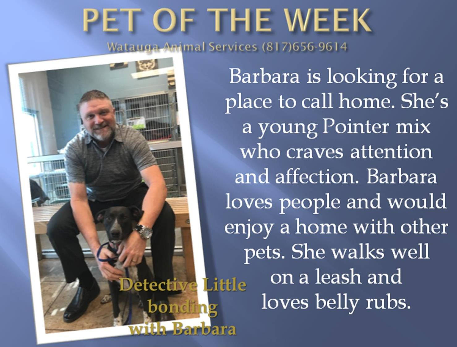 Pet of the Week - Little
