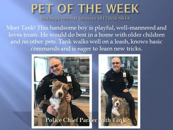 PET OF THE WEEK Tank Parker