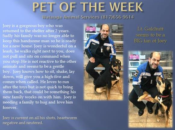 Pet of the Week - Joey Galchutt