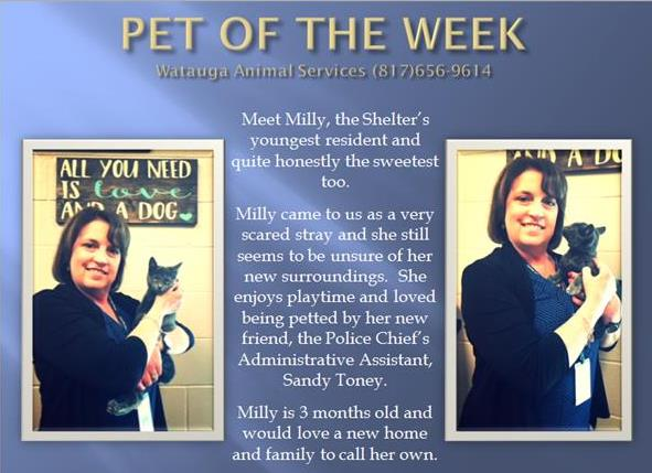 PET OF THE WEEK - Sandy and Milly