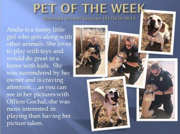 PET OF THE WEEK Gochal and Andie