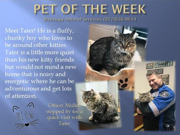 Pet of the Week - Tator and Muller