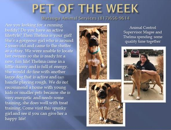 Pet of the Week - Magee and Thelma