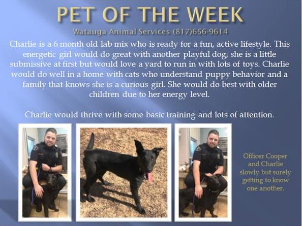Pet of the Week - Charlie and Ofc Cooper