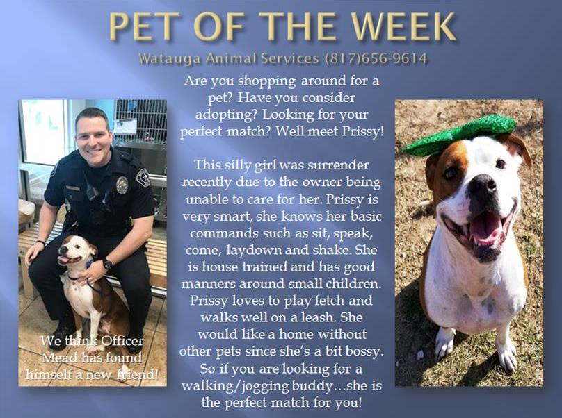 Pet of the Week - Mead and Prissy