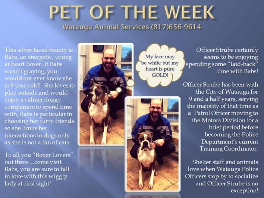 Pet of the Week - Strube and Babs