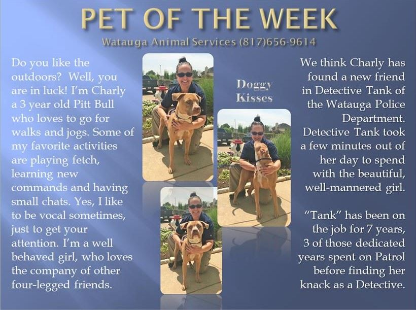 Pet of the Week - Tank and Charly