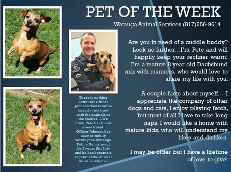 Pet of the Week - Johnson and Pete