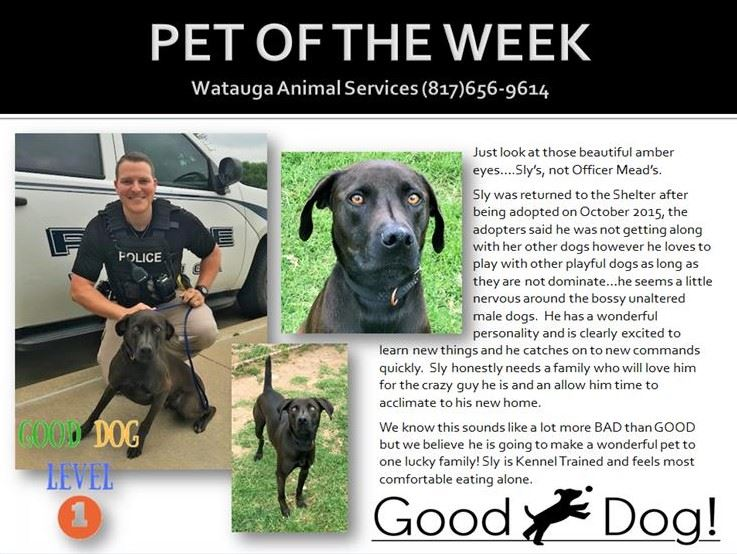 PET OF THE WEEK - Mead and Sly