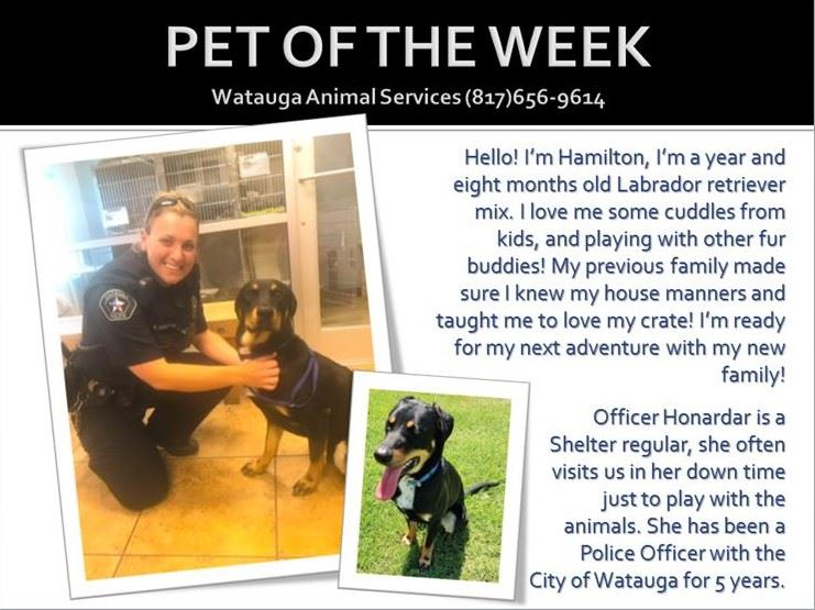 PET OF THE WEEK - KACEE AND HAMILTON