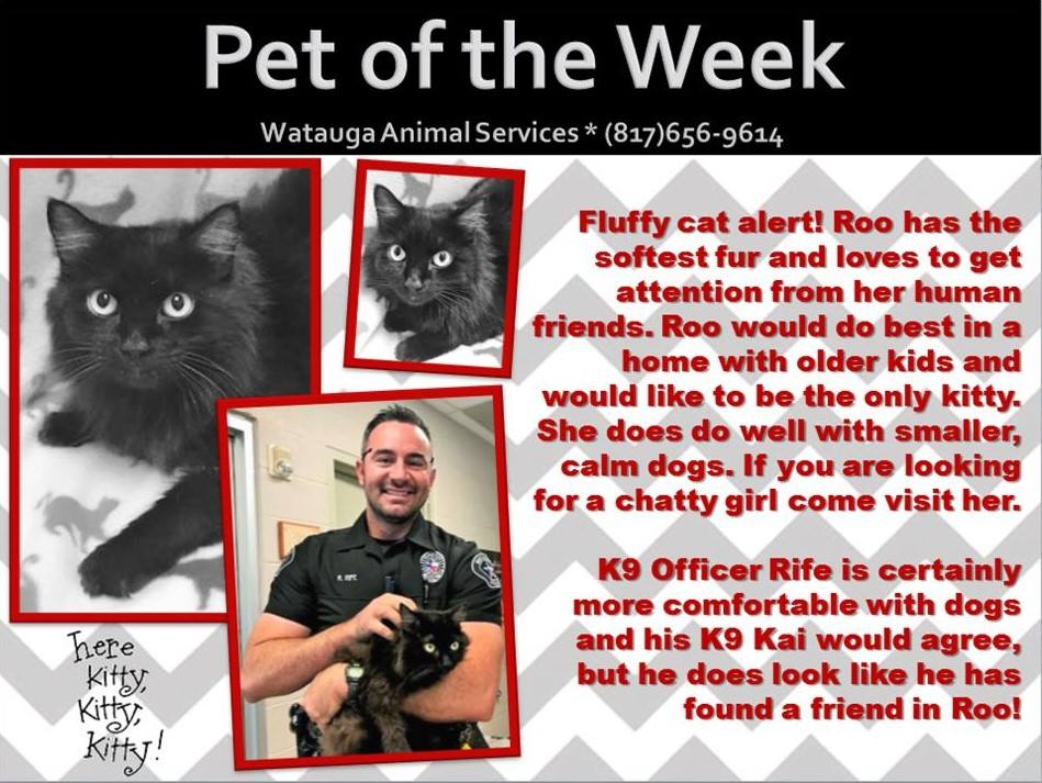 Pet of the Week - Rife and Roo