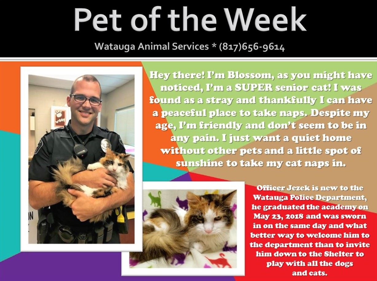 PET OF THE WEEK - Jezek and Blossom