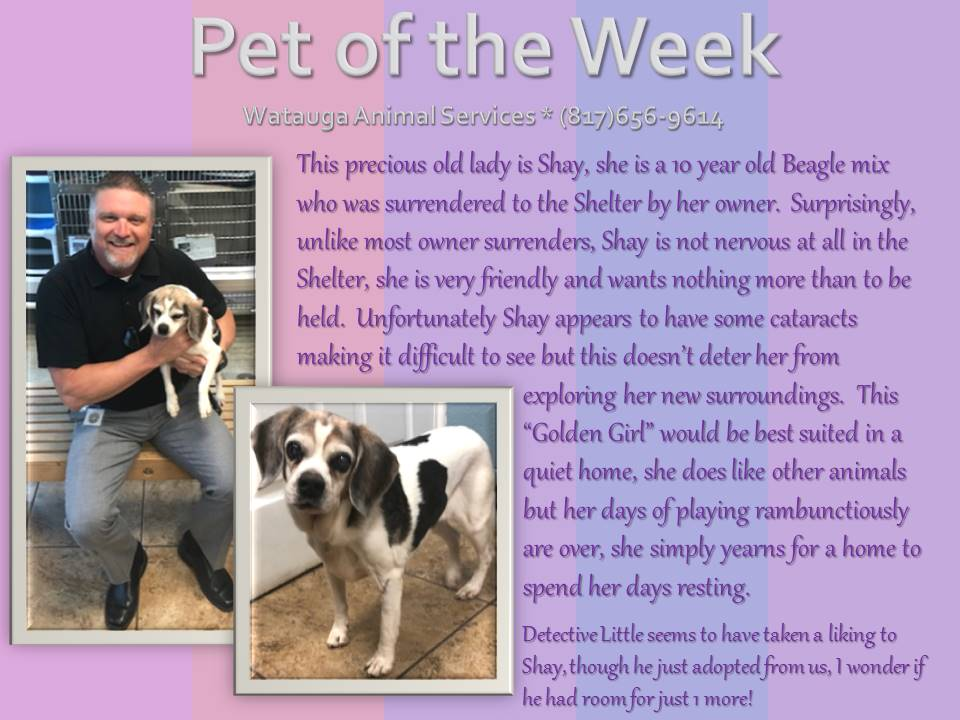 Pet of the Week - Little and Shay