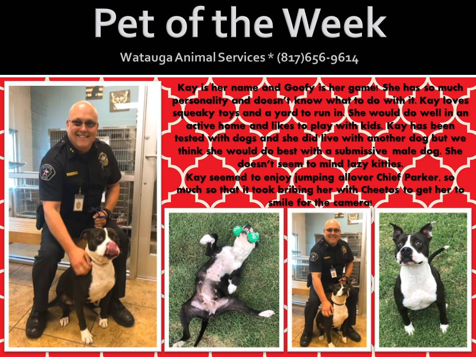 Pet of the Week - Parker and Kay