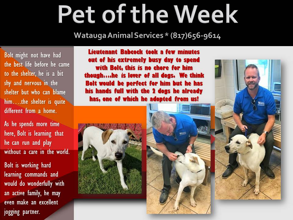 Pet of the Week - Babcock and Bolt