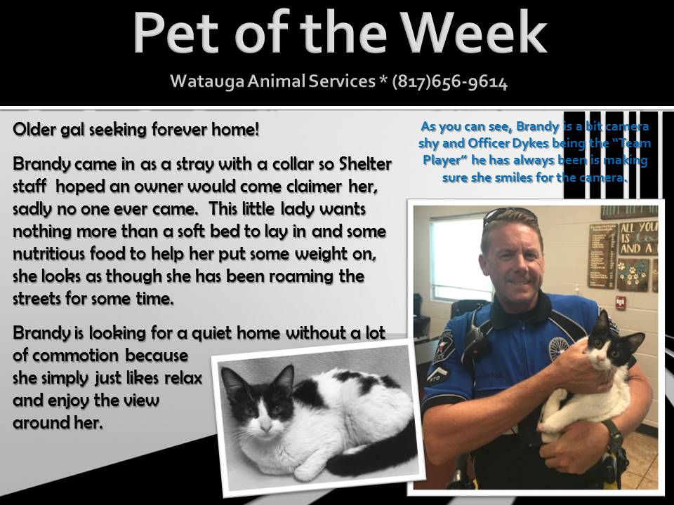 Pet of the Week - Dykes and Brandy