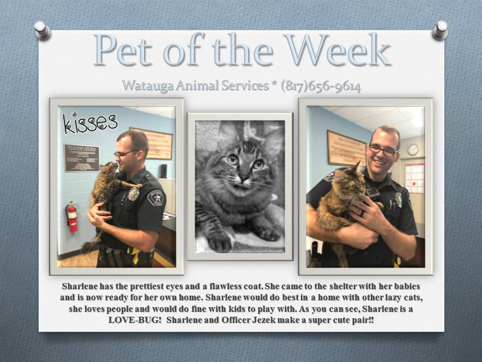 Pet of the Week - Jezek and Sharlene