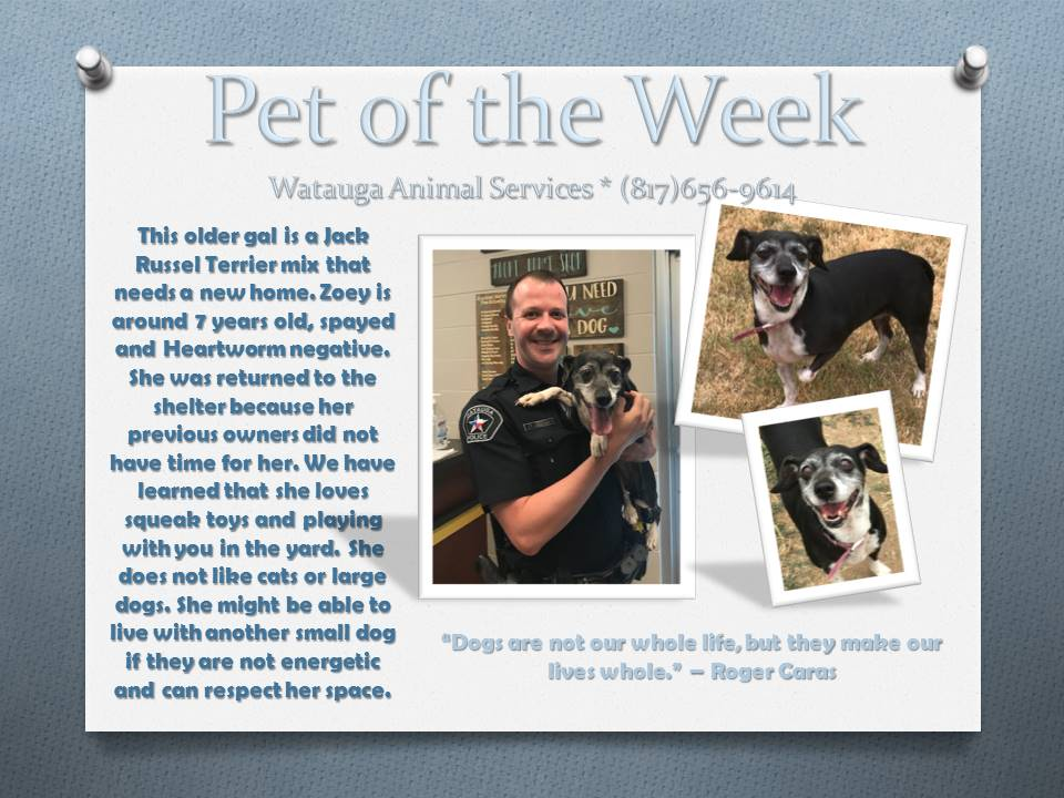 Pet of the Week - Zoey and Officer