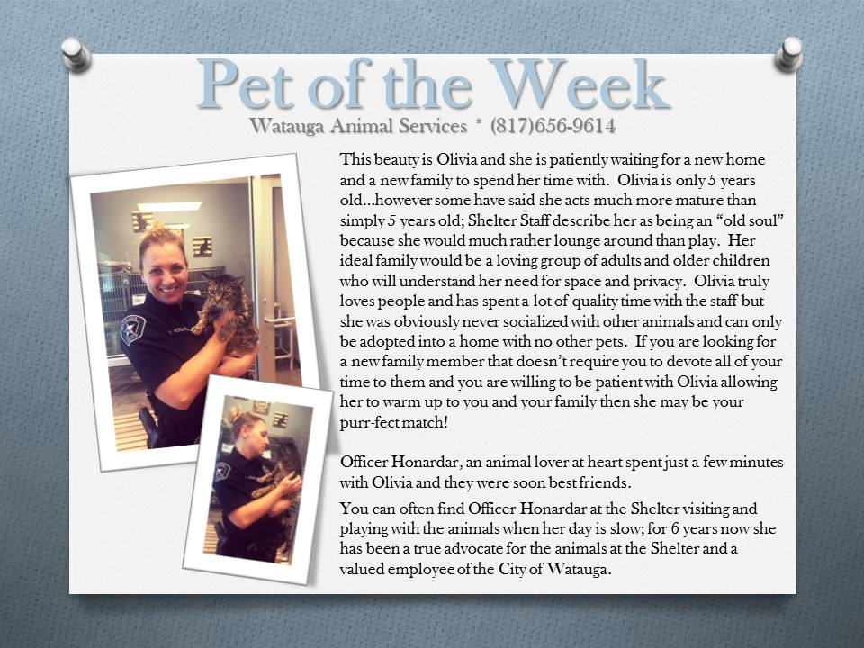 Pet of the Week Olivia and Honardar