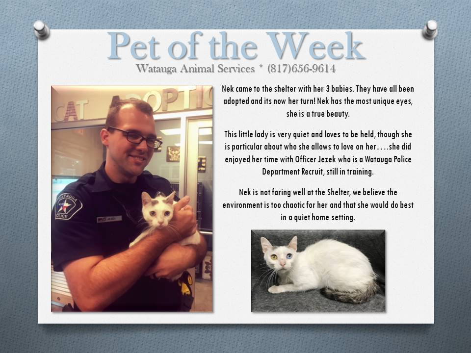 Pet of the Week - Jezek and Nek