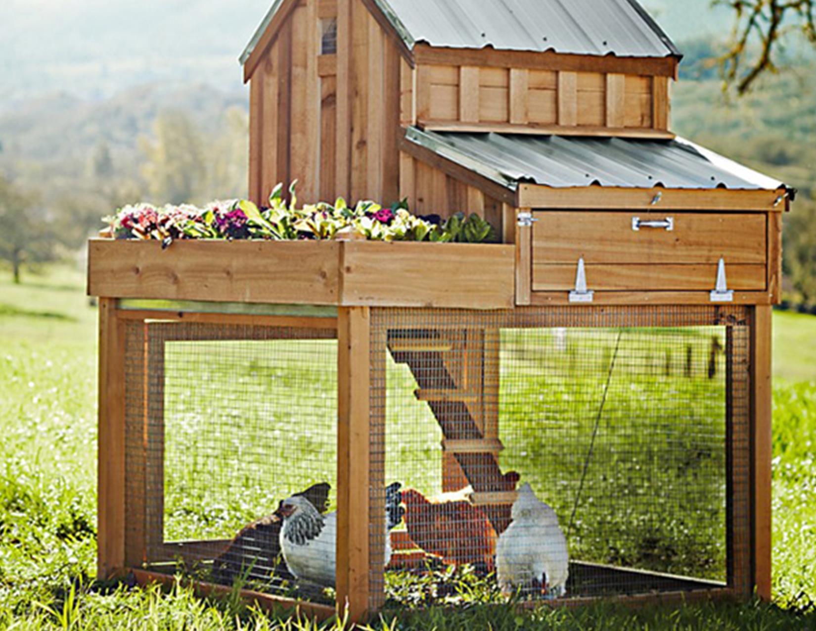 Backyard Chickens Watauga Tx Official Website