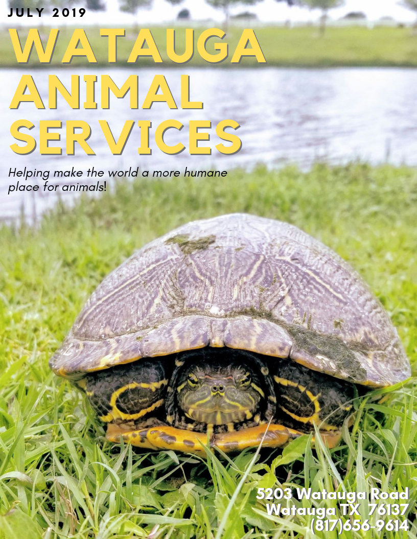 Watauga Animal Services Newsletter - July 2019 COVER
